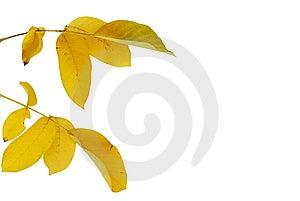 Yellow Autumn Leaves Stock Photo - Image: 6755180