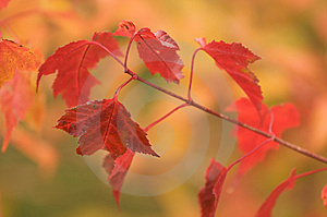 Autumn Leaves Stock Photo - Image: 6758580
