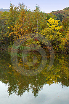 Autumn Forest And Lake Scenery. Stock Photo - Image: 6759130