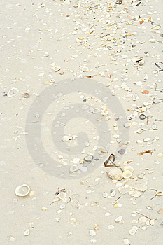 Seashells In The Sand Vertical Stock Photos - Image: 6776183