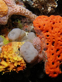 Coral Reef Stock Photography - Image: 6780342