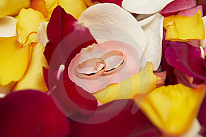 Wedding Rings On Pink Petal Of Roses. Stock Photo - Image: 6786300