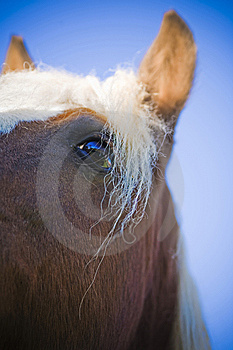 Horse Royalty Free Stock Images - Image: 6796409