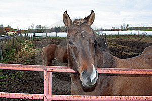 Horse In Corral Royalty Free Stock Photo - Image: 6796525