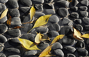Leaf On The Cobble Royalty Free Stock Photo - Image: 6796605