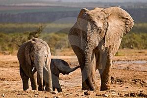 Three Elephants Royalty Free Stock Photography - Image: 6798627