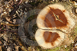 Tree Stump Stock Photos - Image: 689443