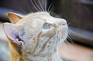 Cat Portrait Stock Image - Image: 6803151