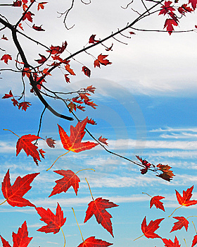 Autumn Leaves Copyspace Royalty Free Stock Photos - Image: 6804118