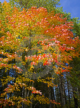September Neon Royalty Free Stock Image - Image: 6804696