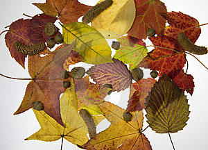 Fall Leaves Royalty Free Stock Images - Image: 6806099