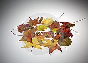 Fall Leaves Stock Images - Image: 6806174