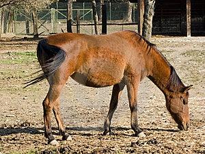 Erwachsenes Pferd Stockfoto - Bild: 6811940