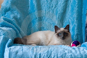 Cat Royalty Free Stock Photography - Image: 6812317