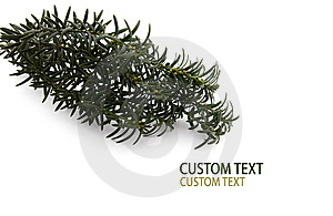 Conifer Branch Stock Photos - Image: 6812953