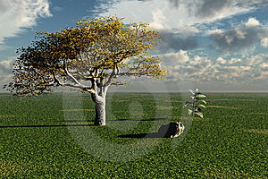 Peaceful Scene Royalty Free Stock Images - Image: 6815359