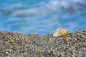Seashell On The Beach Royalty Free Stock Photo - Image: 6815695