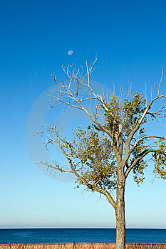 Tree And Daytime Moon Stock Photography - Image: 6823352