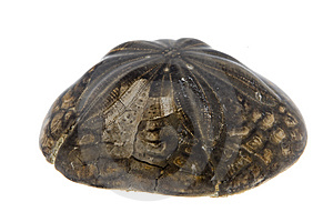 Fossil Stock Images - Image: 6823534