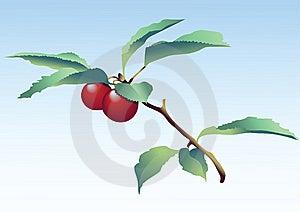 Cherry Royalty Free Stock Photos - Image: 6834148