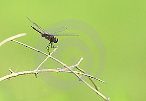 Dragonfly Stock Photo - Image: 6834870