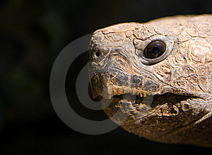 Turtle Face Royalty Free Stock Photography - Image: 6838147
