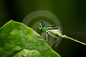 Damsel On Leave Stock Images - Image: 6838594