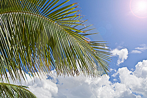 Palm Tree Paradise Royalty Free Stock Photo - Image: 6844685