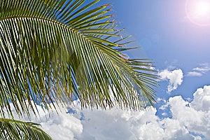 掌上型计算机天堂结构树 免版税库存照片 - 图片: 6844685