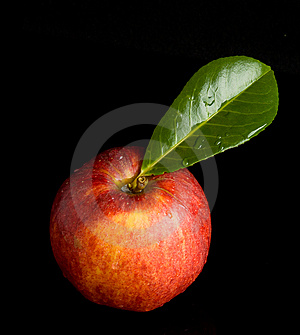 Wet Red Apple On Black Royalty Free Stock Images - Image: 6845089