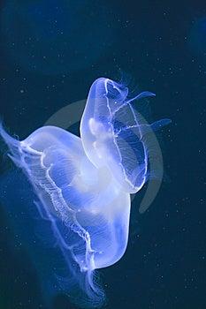 Marine Life Royalty Free Stock Images - Image: 6850809
