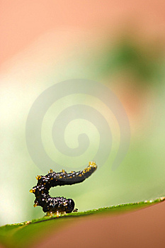 Athletic Caterpillar Royalty Free Stock Photography - Image: 6853067