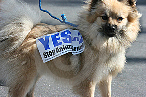 Cute Dog And 2008 Election Royalty Free Stock Photography - Image: 6859767
