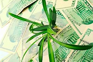 Die Zunahme Der Dollarzitate Lizenzfreie Stockfotografie - Bild: 6860297