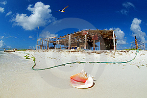 Cockleshell On Seacoast Stock Photography - Image: 6862942