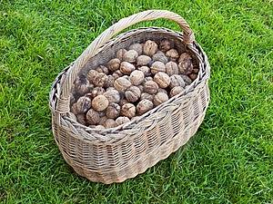 Basket Of Walnut Royalty Free Stock Image - Image: 6870246