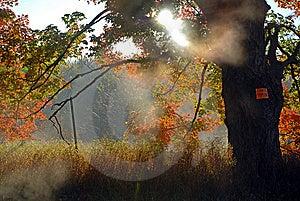 Autumn Mist Stock Photography - Image: 6871152