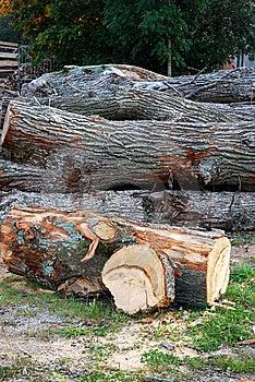 Peeled Log Stock Images - Image: 6873374