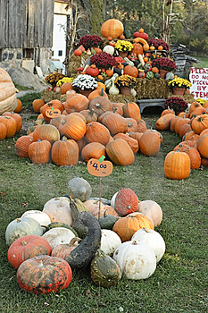 Pumpkin Sale Royalty Free Stock Images - Image: 6877419