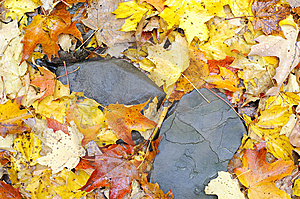 Colorful Fall Leaves On Ground Royalty Free Stock Images - Image: 6878709