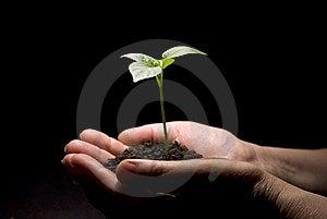 Plant Stock Photo