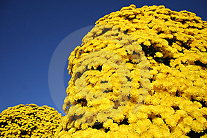 Flower Tower Royalty Free Stock Image - Image: 6898616
