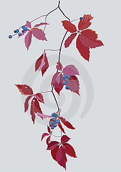 Woodland Grape Royalty Free Stock Images - Image: 6906339