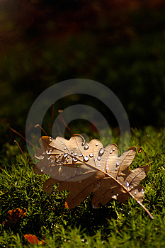 Waterdrops On Autumn Leaf Stock Photography - Image: 6906502