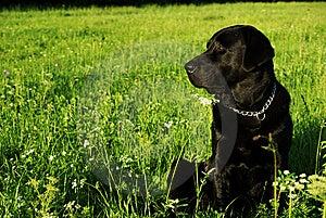 A Black Tough Guy Stock Photos - Image: 6907133