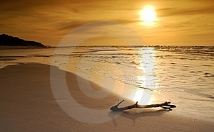 Lonely Branch Droped Out From The Sea On A Beach Stock Images - Image: 6908654