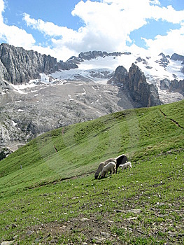 Sheeps In The Mountains Royalty Free Stock Image - Image: 6909176
