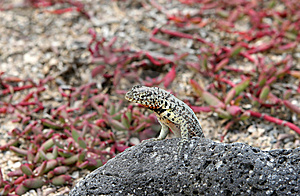Little Lizard Royalty Free Stock Photography - Image: 6910157