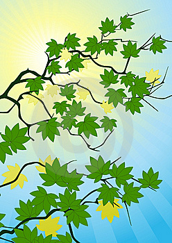 Trees Brunch In The Sunny Day Royalty Free Stock Photo - Image: 6910205