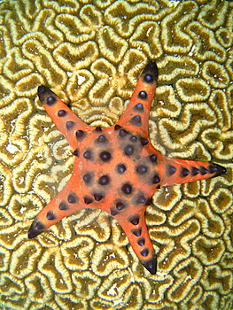 Starfish On Coral Stock Photos - Image: 6913463